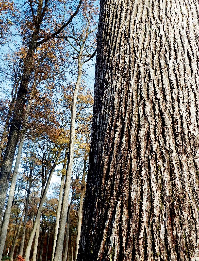 Forêt de Bercé en automne.