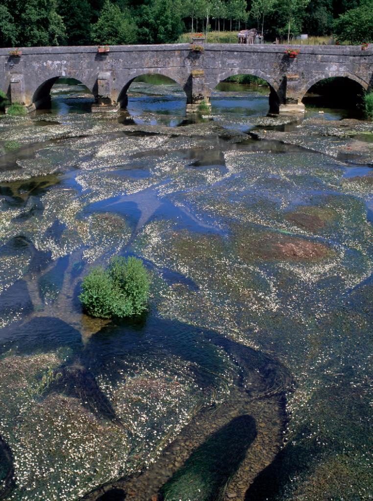 La Saulx, rivière planitiaire