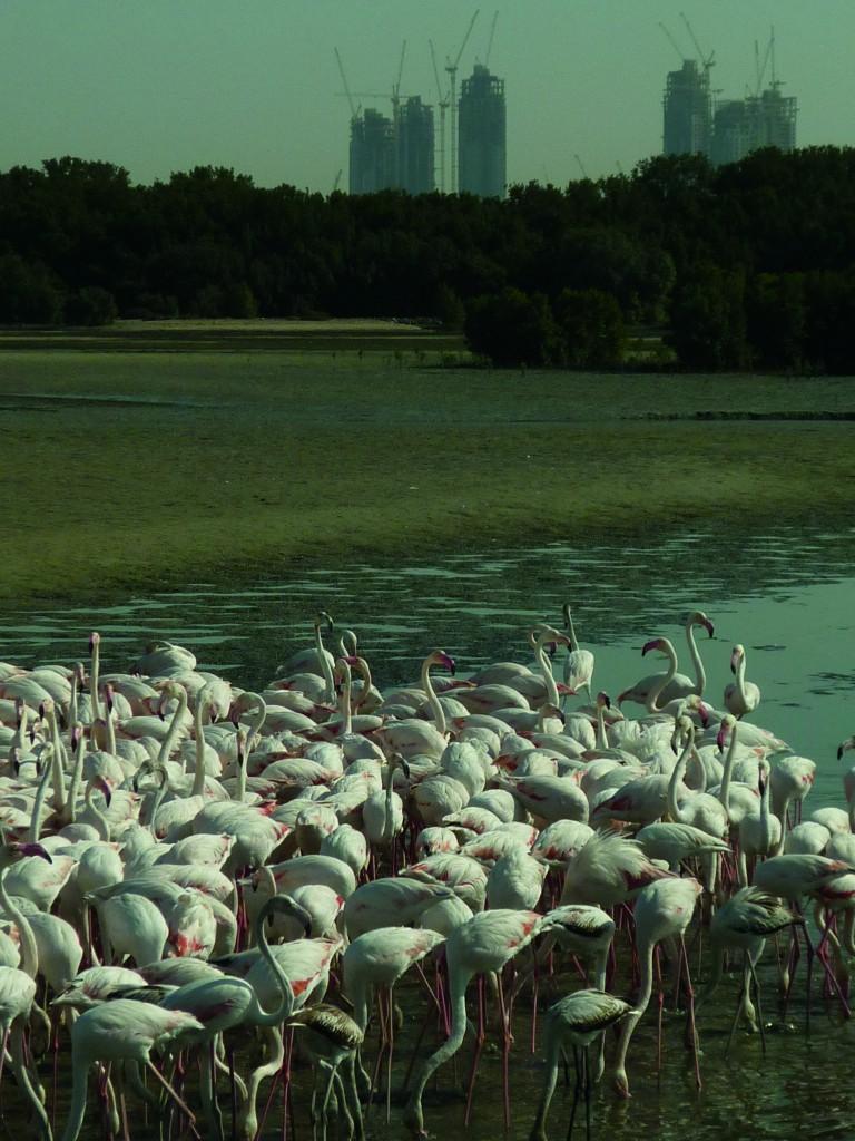 COP de la Convention Ramsar - Dubaï