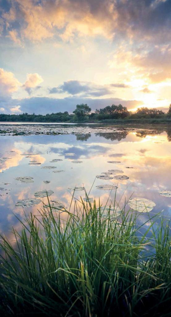 Réserve naturelle nationale du Romelaëre