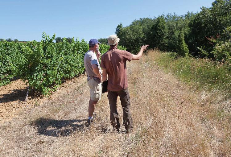 La gestion des abords de vigne peut faire l'objet de préconisations d'ordre écologique.
