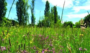 Prairie naturelle fleurie. © Adasea 32