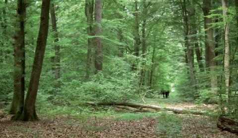 Forêt domaniale d'Hémilly