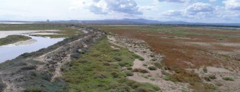 La digue à la mer impacte la connexion entre le côté plage et le côté anciens salins.