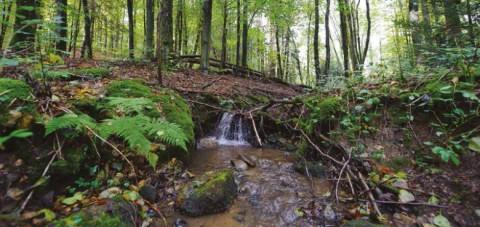 Considérer la protection des écosystèmes non plus comme un frein à l'aménagement du territoire mais comme une opportunité d'un développement à plus long terme.