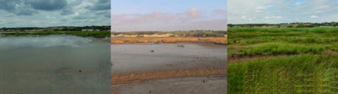 Évolution de la sédimentation et de la végétation du site après dépoldérisation (observatoire photographique depuis 2009).   © Cen Nouvelle-Aquitaine