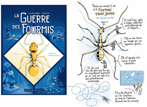 La guerre des fourmis. Courchamp Ughetti